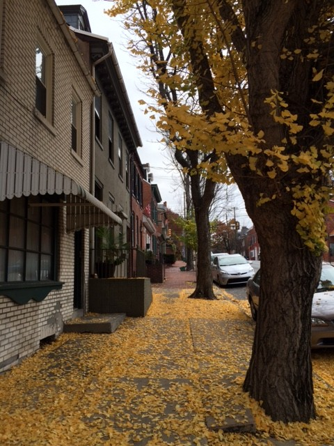 north lime near musser part fall houses and leaves on sidewalk