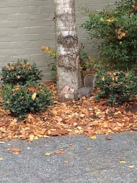 squirrel near foot of treet in lancaster