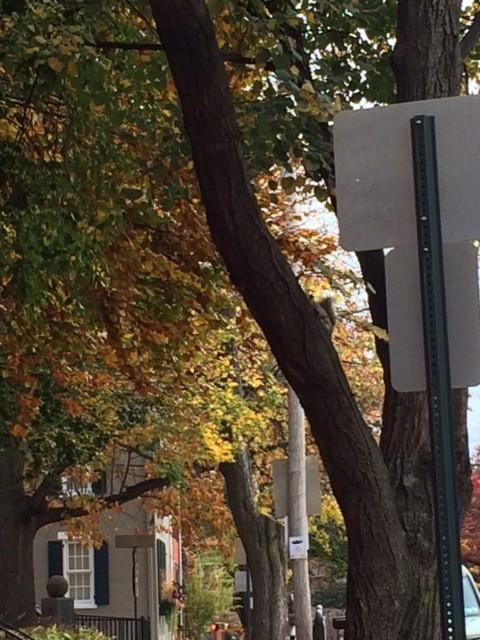 squirrel in tree near lancaster art museum